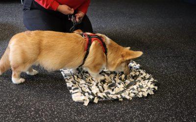 Varför Du Borde Slänga ut Din Hunds Matskål