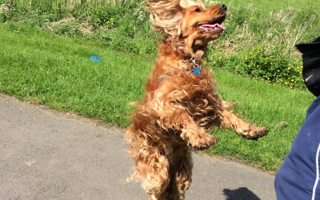 Har du en problemhund eller en entusiastisk knasboll?