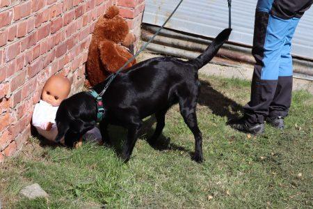 Problemhund stressad hund skäller på besökare